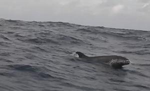 Surfacing Whale