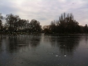 Seagulls standing on the frozen boating lake in Regents Park. And yes, global warming IS a reality - but it's about average temperatures, not individual instances of hot or cold weather.